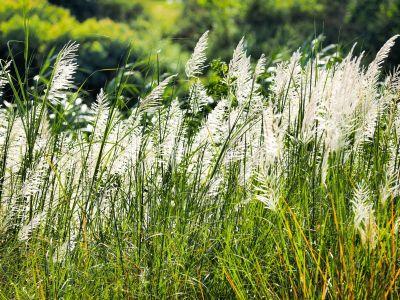 Okrasne traviny do zahrady