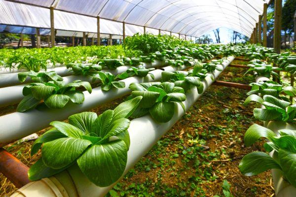 Výsledek obrázku pro hydroponické pěstování