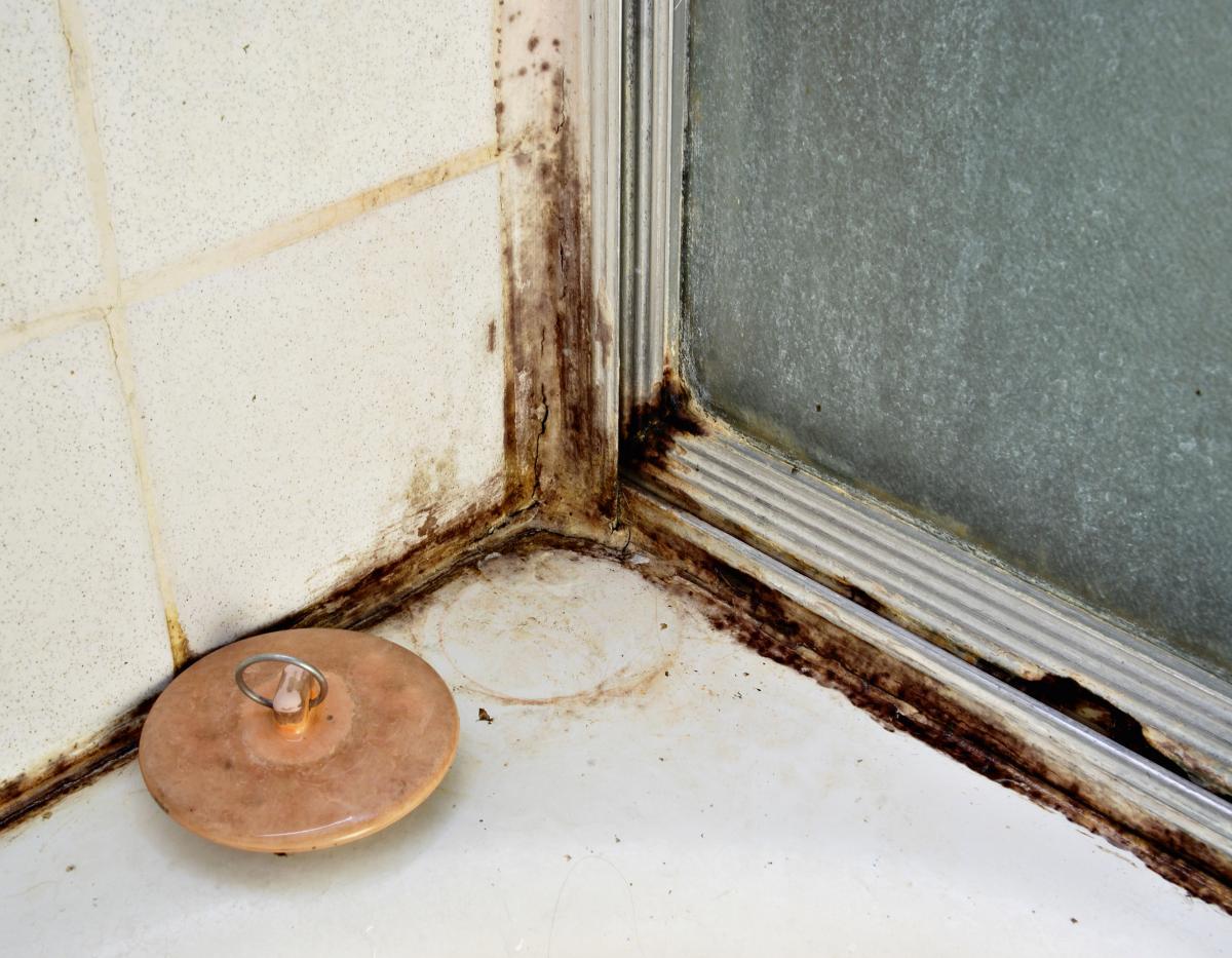 Чем очистить плесень в ванной домашних условиях