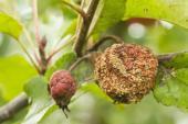 Jarní postřiky jabloní